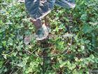 齐全可定制玉山县施肥罐质优价廉 江西果树滴灌设备品质*