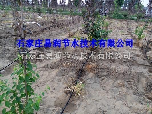 广西果树滴灌滴头价格|高效节水灌溉产品