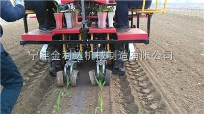 可根据要求调整株行距新型番茄移栽机
