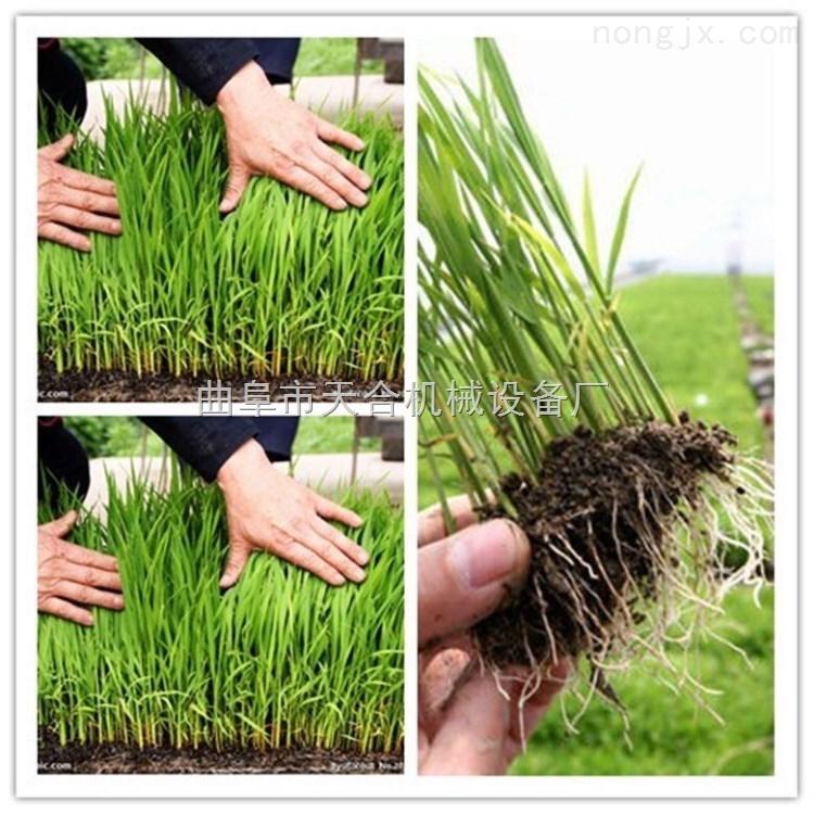 用育秧盘育秧的插秧机 手动插秧机 小型水稻插秧机