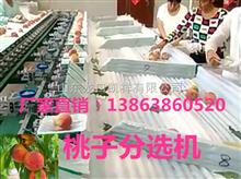 XGJ-T陕西桃子分选机