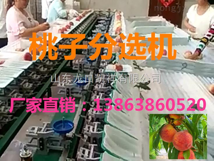 凯祥桃子分选机-水果分级机-高品质分选机