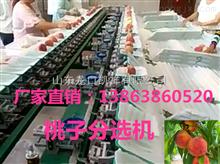 XGJ-T新型桃子分选机