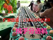 XGJ-T适合国内使用桃子分选机