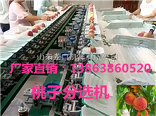 XGJ-T山东新款桃子选果机