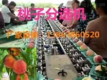 XGJ-T蜜桃分选机分选蜜桃大小的设备