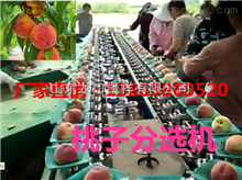 XGJ-T速度快的桃子选果机