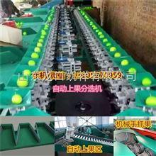 XGJ-QZ青枣分拣机-机械称重式青枣分拣机-青枣分拣机厂家直销