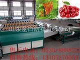 6xy-2烟台大樱桃选果机-樱桃选果机厂家-樱桃选果机价格