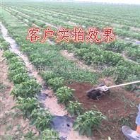 小型蔬菜基地松土除草机 生产农用旋耕锄草机 背负式割草机