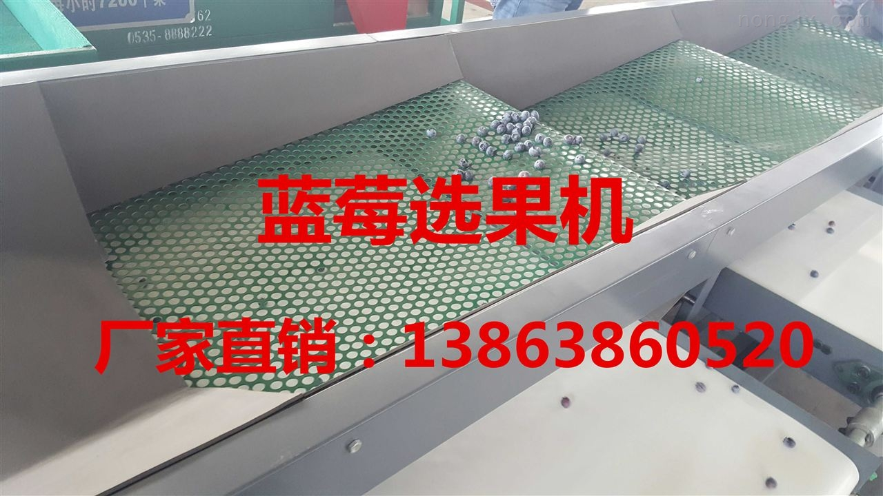 供应高效率蓝莓分级机厂家 蓝莓筛选分级厂家直营 蓝莓选果机分级机