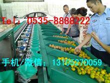 XGJ-J供应全自动柑橘(柑桔)选果机厂家 四川柑桔选果机 分选柑橘大小机器