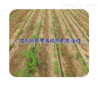 上饶县大田滴灌带多孔出水 江西膜下滴灌实用农业技术