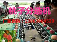 XGJ-T江苏蜜桃重量分级机