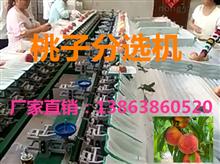 XGJ-T江苏蜜桃拣果机提高商品率