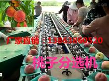 XGJ-T江苏桃子分选机-销量好的桃子分选机