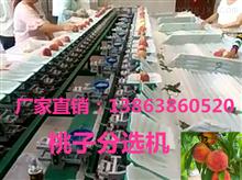 XGJ-T江苏桃子分级机详细介绍