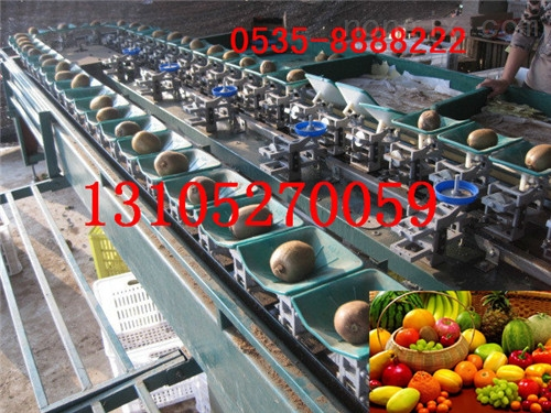XGJ-MHT-供应全自动猕猴桃选果机 猕猴桃分级处理选果机 分选猕猴桃大小的机器