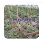 齐全江西蔬菜滴灌局部均匀灌溉 上饶市滴灌带好材料生产