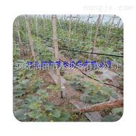 江西蔬菜滴灌局部均匀灌溉 上饶市滴灌带好材料生产