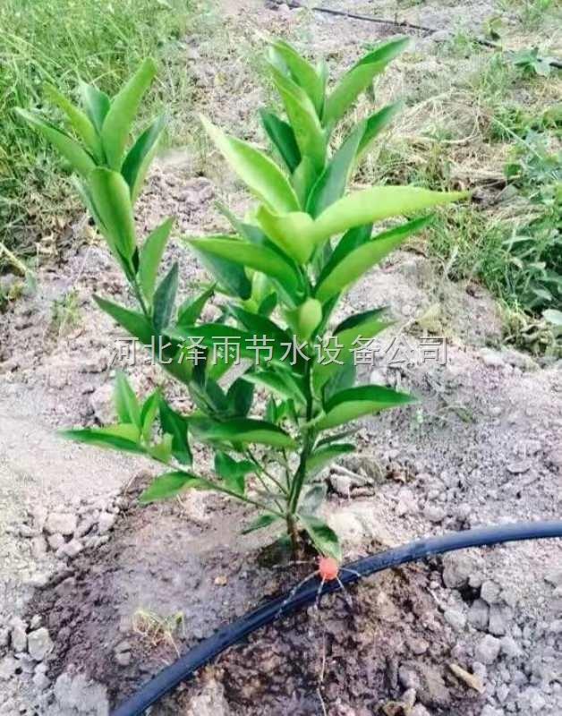 怀化市果园灌溉用管价格湖南省大棚滴灌带滴灌管厂家直销
