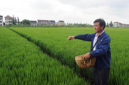 上海:练内功机农一体种养结合