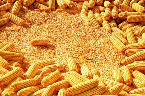 党中央、国务院:2017年玉米等收储制度改革将持续深化