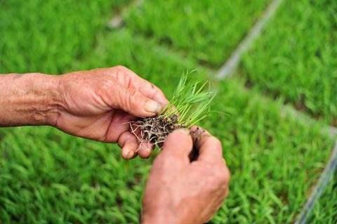 潘集区高水稻种植机械化水平获全面提升