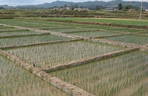 农业部:逐步建立水稻侧深施肥装置补贴长效机制
