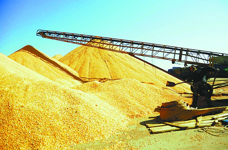 首先,从华北产区来看,据了解,目前山东、河南地区新季玉米基本全面上市,天气普遍晴好有助于潮粮脱水,农户售粮心态积极,新粮大量入市对玉米价格造成严重打压,市场主流深加工企业收购价已逐步向1600元/吨靠拢,虽然河北、西北等地玉米约在月底才能上市,但企业消耗前期拍卖粮库存为主,普遍调低价格反映企业悲观心态。此外,河南地区玉米因颗粒普遍较小,难以满足饲料企业粮质要求,需求主体受限或令价格进一步走低,9月以来华北地区玉米价格持续下降,9月初至今累计下跌幅度达180-300元/吨,其中中秋节以来累计下跌幅度为1
