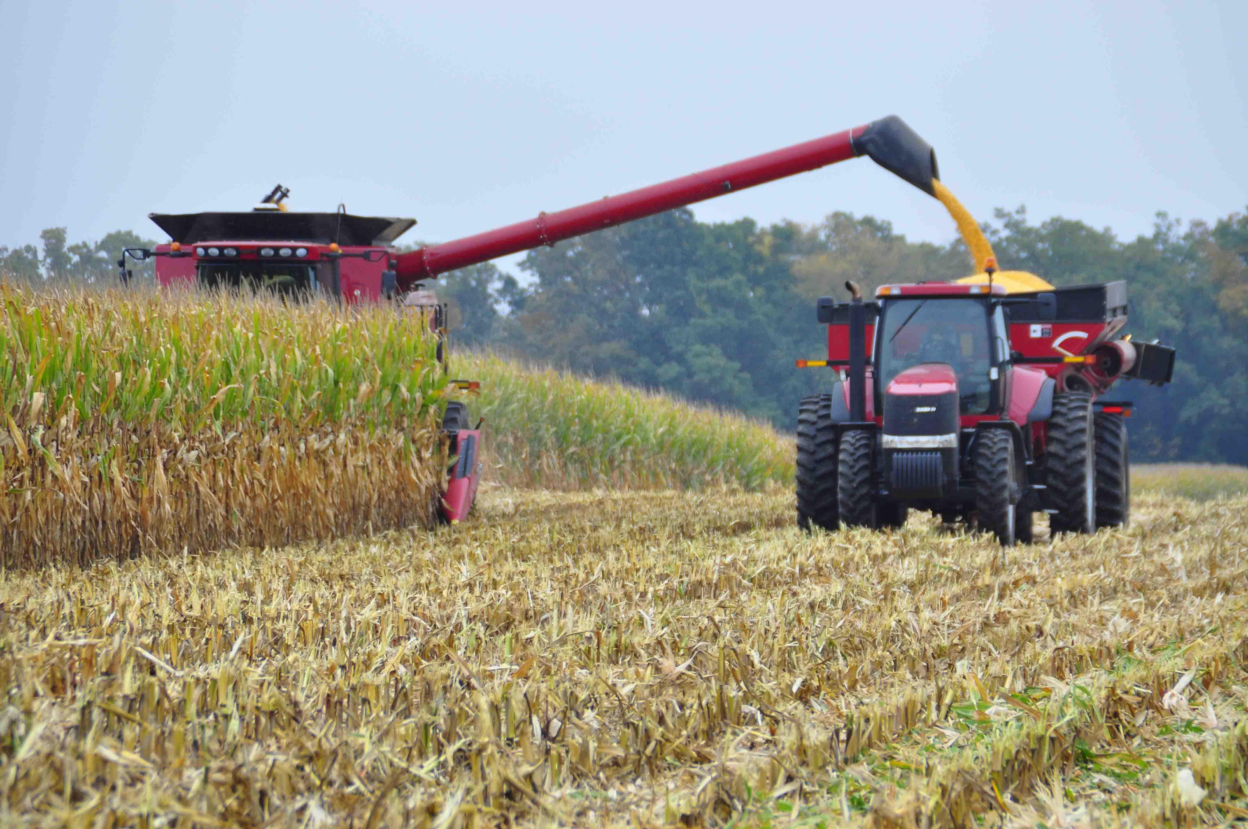 再与农民结算费用,这样做的效果在于秋收结果甚至粮食卖掉后,农民更能图片